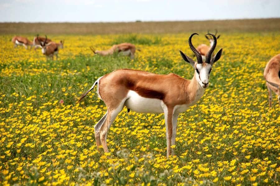 Basics of Wildlife Photography