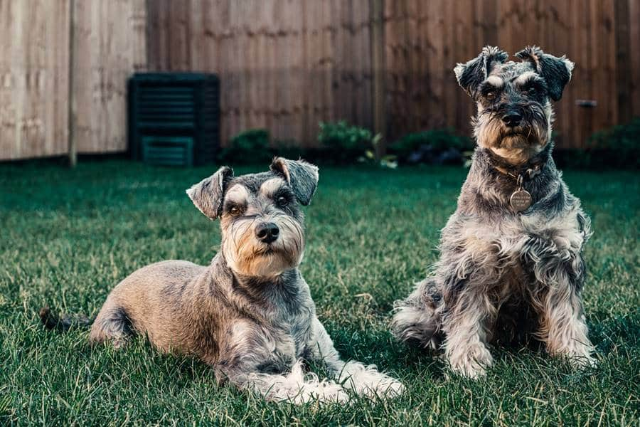 How to Photograph Dogs