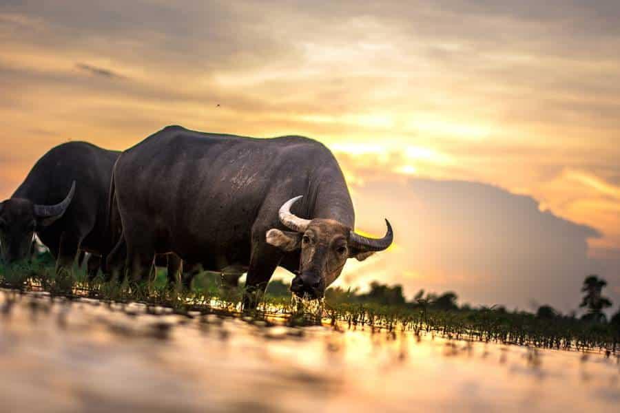 Secrets to Stunning Wildlife Photography
