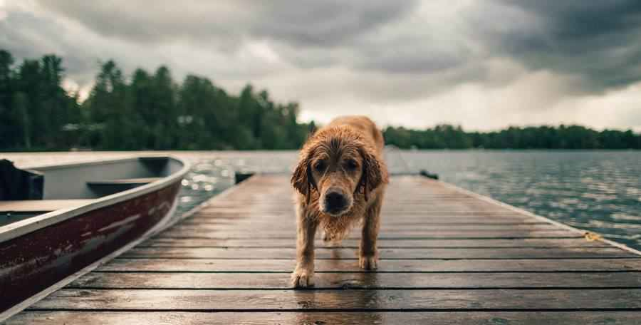 How to Photograph Dogs?